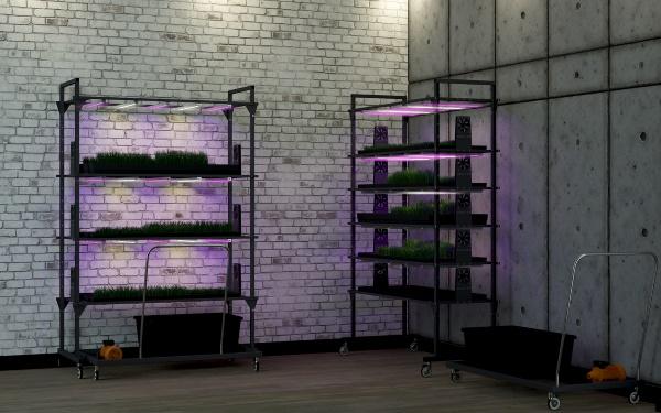 Ситиферма для выращивания витграсса
