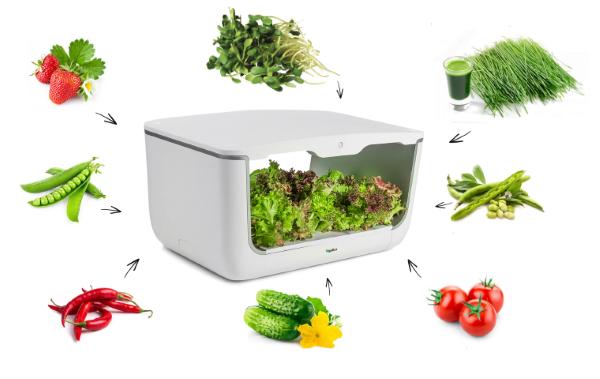 Применение фермы H-Box VegeBox