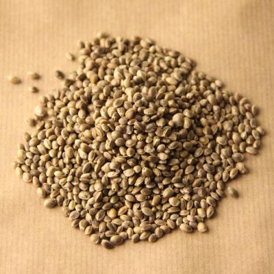 семена конопли для питания